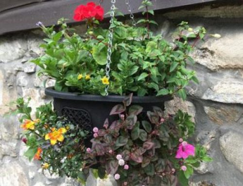 Steven Raine Gardening Focus