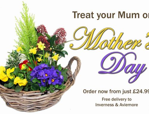 Mother's Day